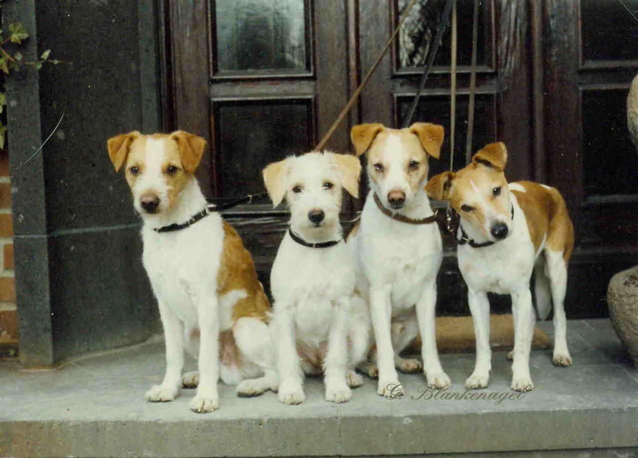 1988 Atoll v. rauhen Stein, Ambra v. Hungenberg, Winald v. Weddern, Quimba v. Weddern