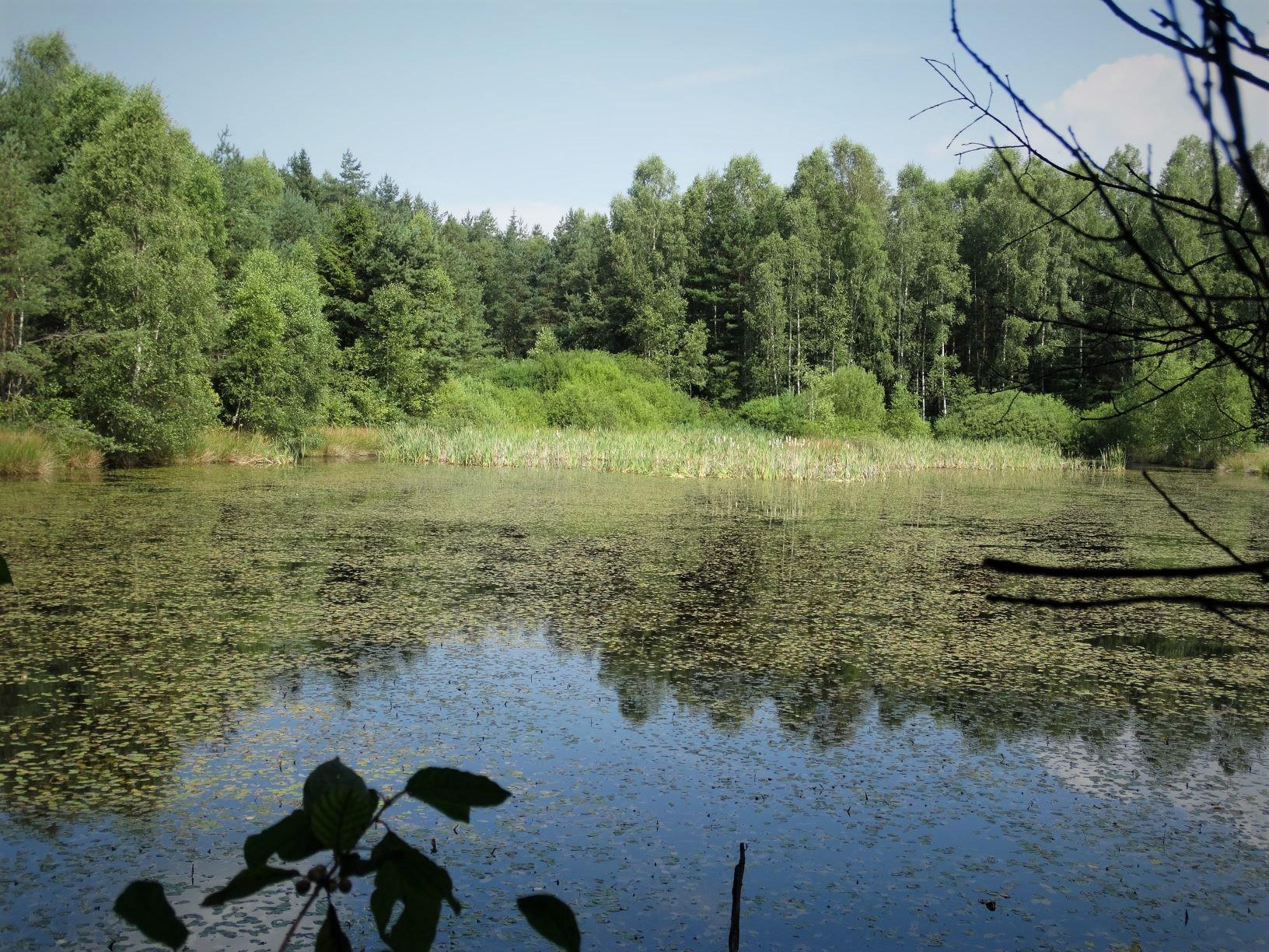 Natur erleben im Waldviertel: