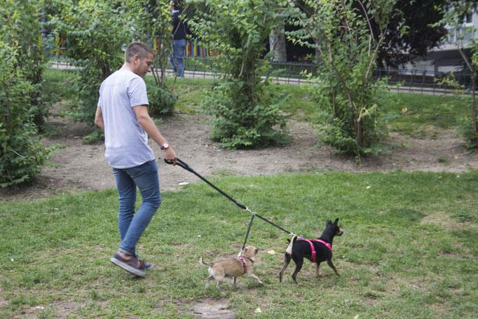 Guardería para perros en Madrid