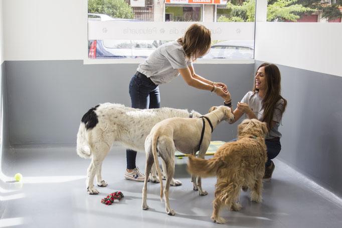 Paseadores de perros en Madrid