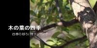 木の葉の四季