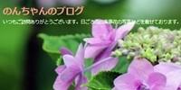 のんちゃんのブログ