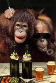 betrunkene affen