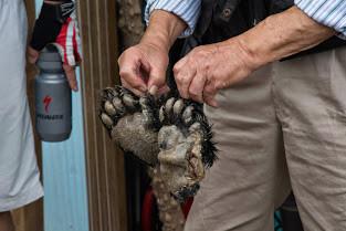 熊の後足を見せてくれました