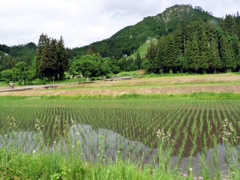 JAで 買い物したり ふるーいお寺さんを巡ったりしながら 田園コースのサイクリング   只見コースも 温泉に入り マイクロバスに揺られて 会津田島駅について いよいよ終わります。    しかし サイクルトレインは これからがまつりです♪   楽しいおしゃべりしながら 浅草に…  皆さんまた あいましょう ありがとうサイクルトレイン♪