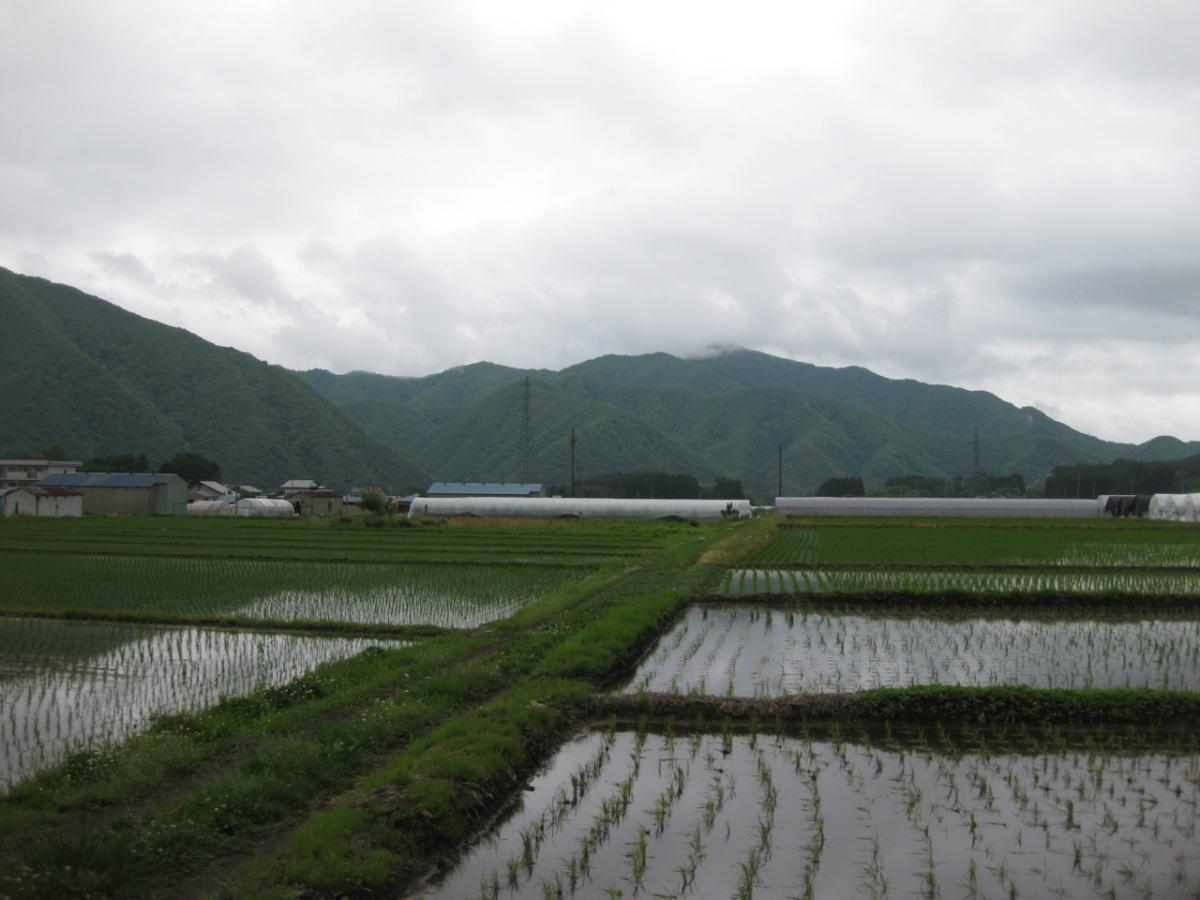 水田と山々のコントラストが美しい。