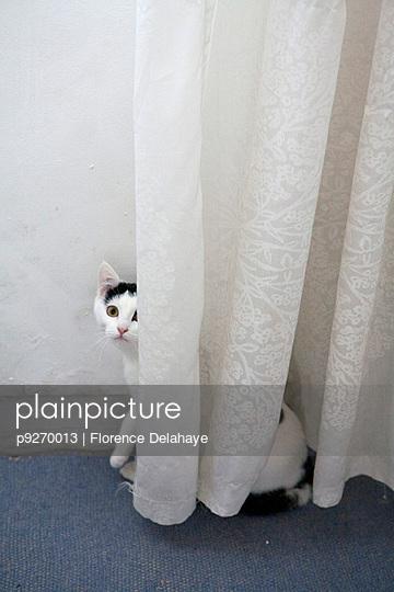 Chat caché derrière le rideau.