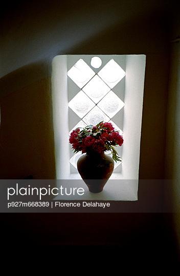 Fleurs à la fenêtre . contrejour .