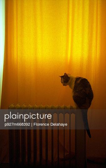 chat assis sur un radiateur devant un rideau jaune. Chaleur et douceur.