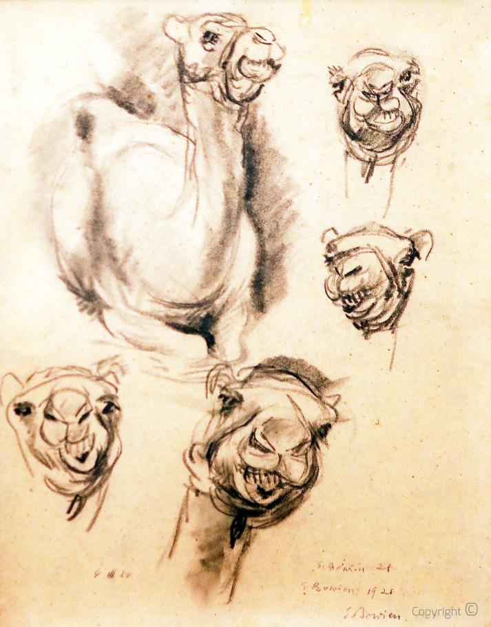 Camels, study, 1928