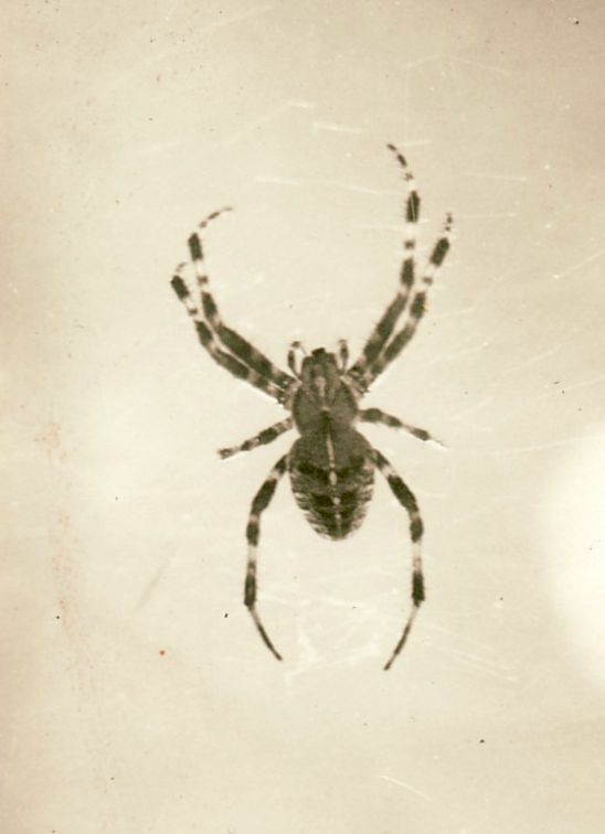 The spider, around 1930