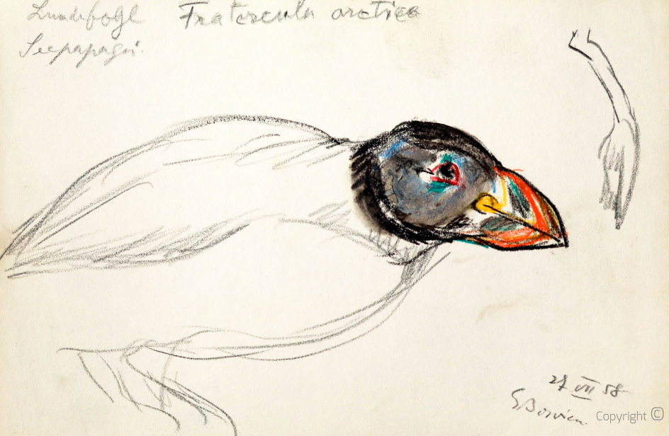 Sea parrot, 1958