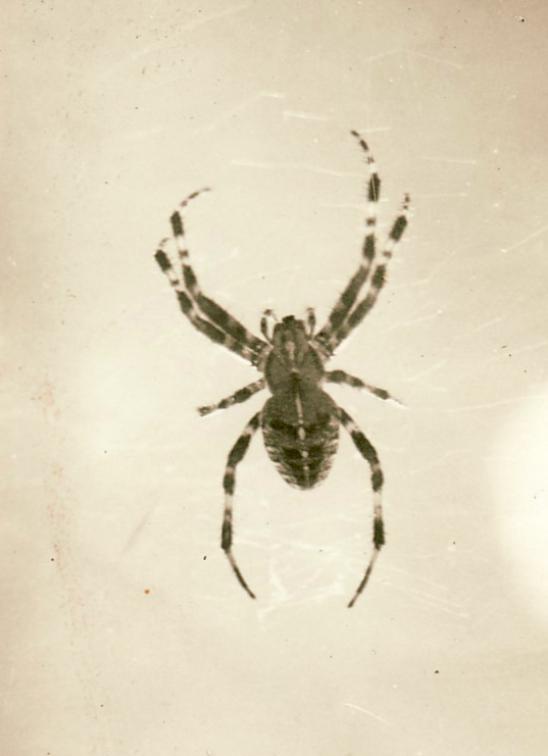 Die Spinne, um 1930