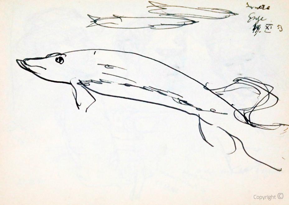Fisch, Studie, 1953