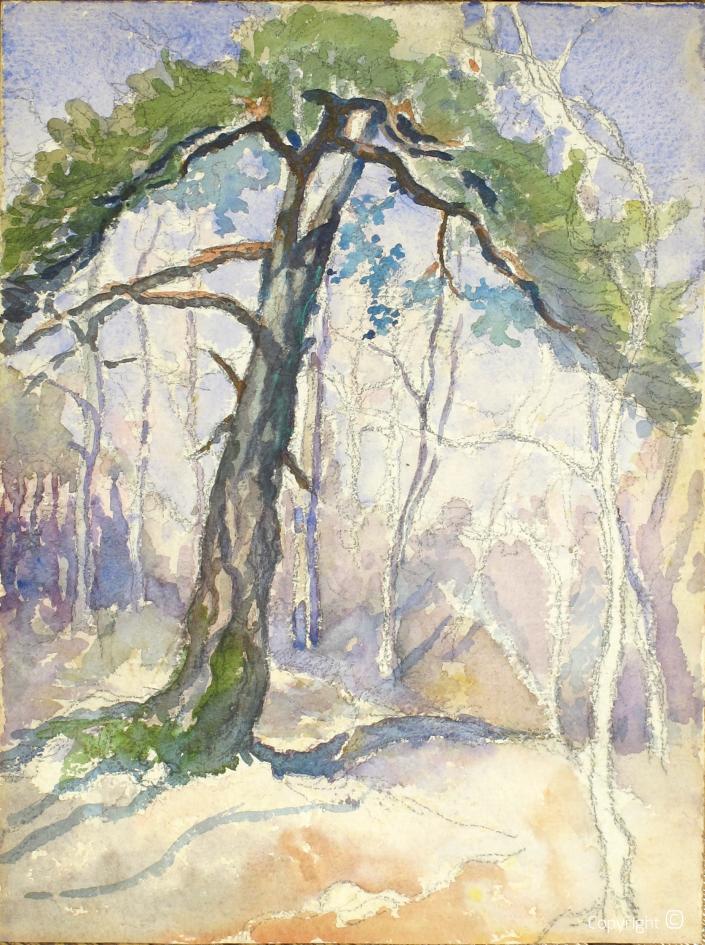 Pine near Neuchâtel, 1916