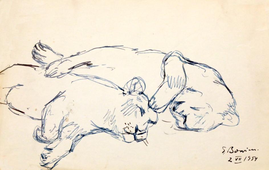 Big cats, study, 1954