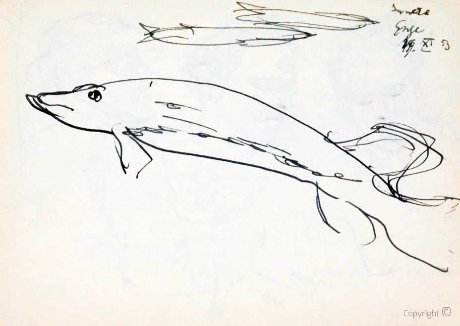 Fish, study, 1953