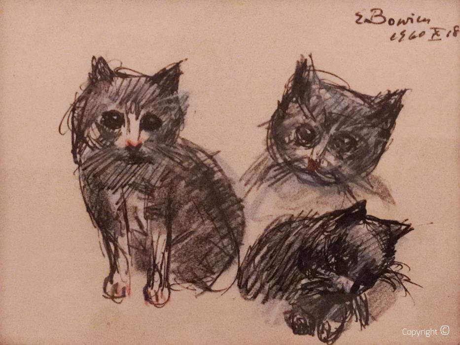 Die Katzen des Hofes Dalskogen im norwegischen Sandnessjøen, 1960