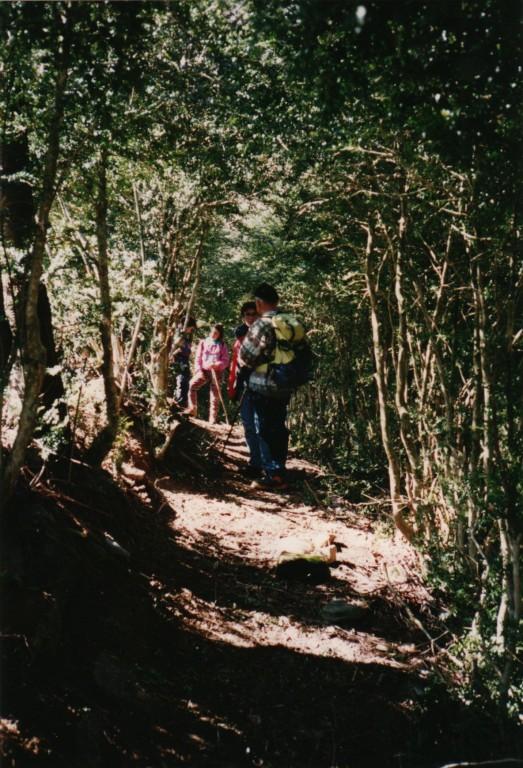 buis près des Fontaines d'Escot