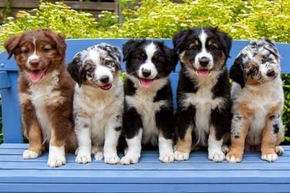 v.l.n.r.: Hurley, Libby, Shannon, Leela, Kate