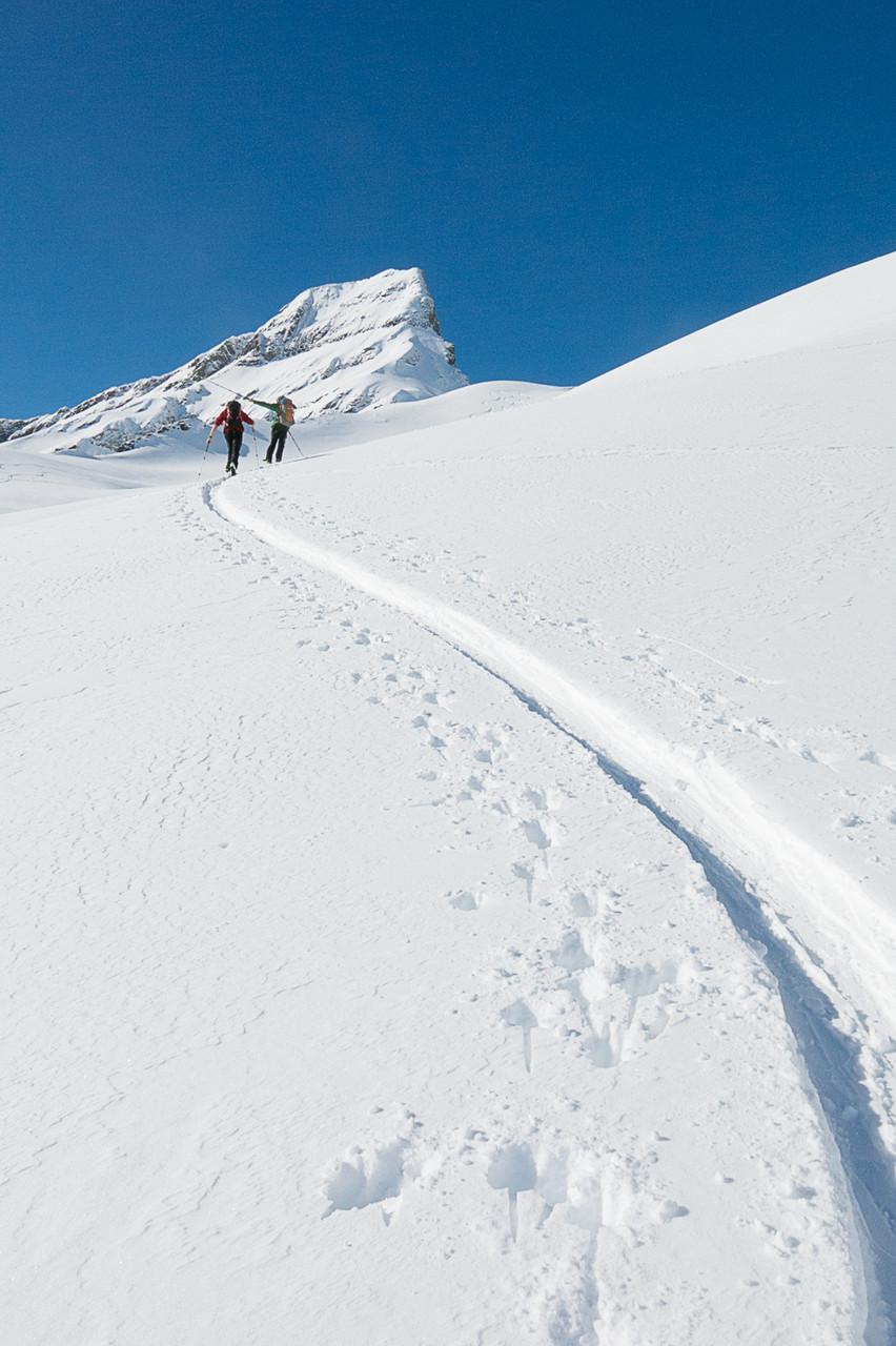 Wildgärst, Schweiz