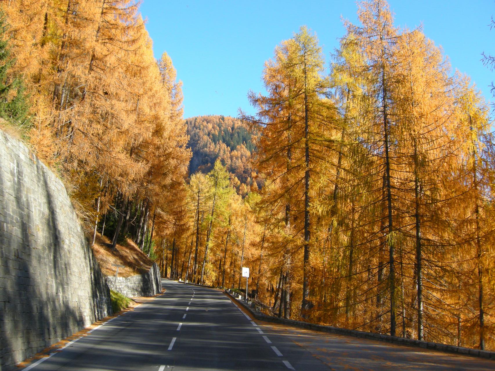 Dieser goldige Herbst