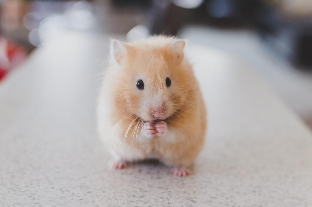 コロナ変異株ついに「ネズミ」も感染した不安