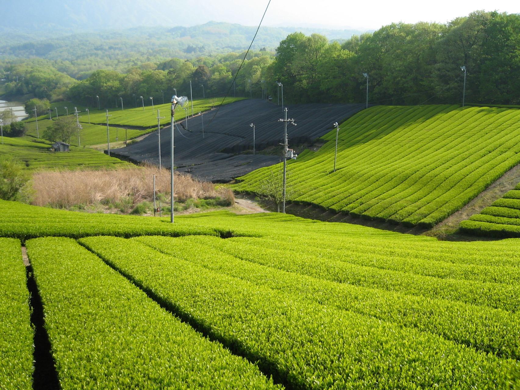 京都宇治市城陽市大久保のパソコン教室ありがとう。とは、宇治市城陽市の地域の皆様をサポートします。