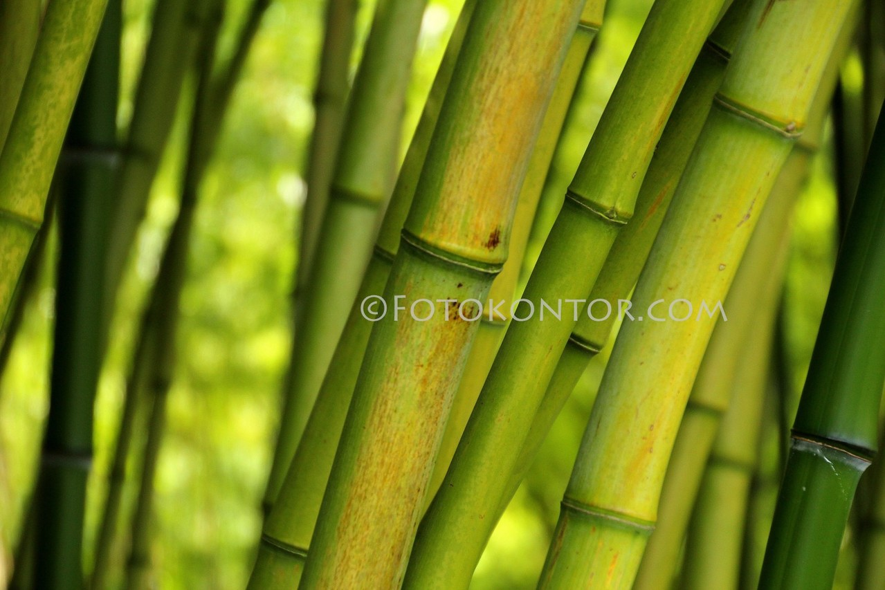 07 Bambus