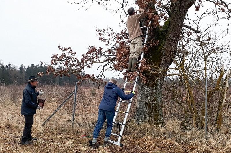 Vogelschutz: Anbringen von Nistkästen für den Wendehals