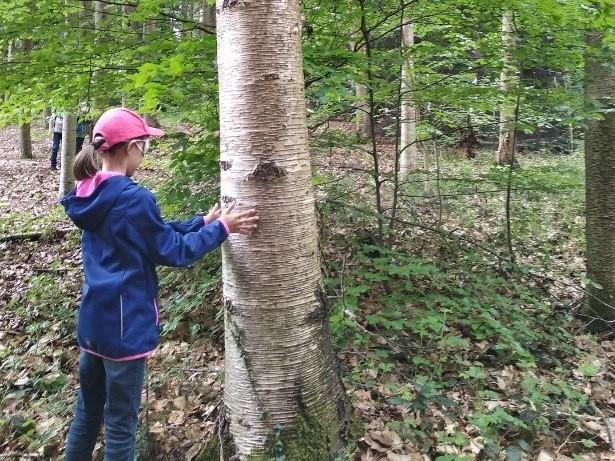 Walddetektive: Spielerisch die Sinne schärfen © Katharina Platzdasch