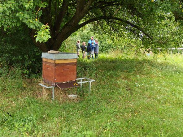 Im Schatten der alten Mirabelle summt ein Bienenvolk © Robert Frank
