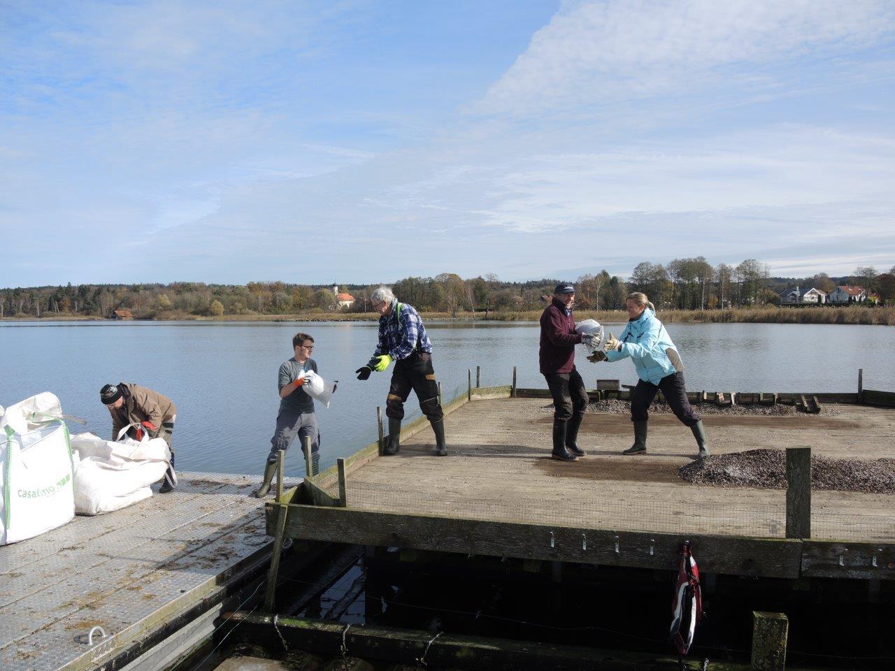 Vogelschutz: Kieserneuerung am Flussseeschwalbenfloß im Starnberger See