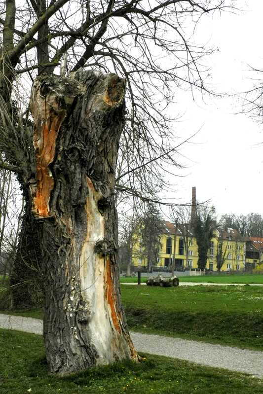 Totholz-Weidenstumpf mit der Alten Brauerei Stegen, in der sich auch die LBV-Geschäftsstelle befindet.