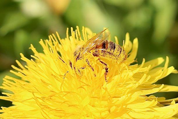 Gewinner Aprilwoche KW 17: Suchbild mit Biene © Anke Ernst