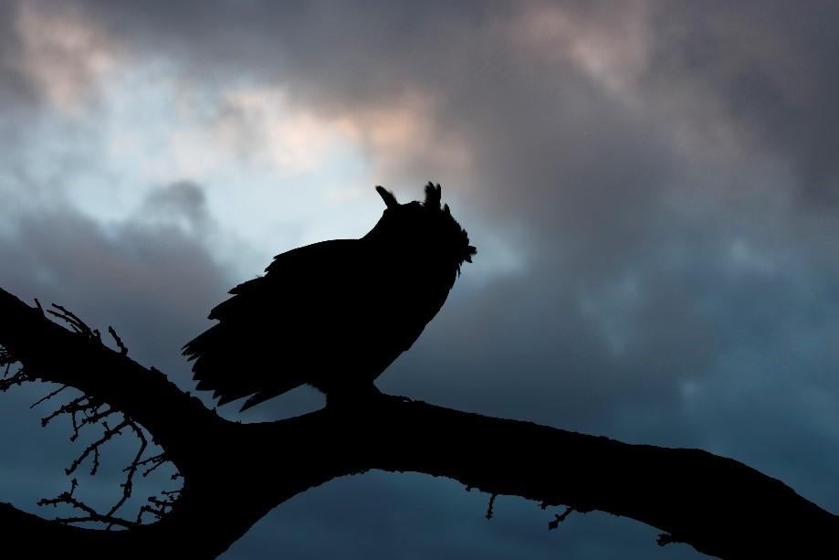 Nachtwanderung im Wald: Ganz schön spannend! © Rosl Roessner