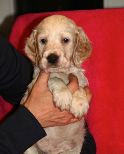 Daisy mit 6 Wochen
