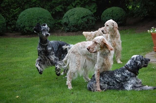 Lola, Daisybelle, Primrose & Lilly