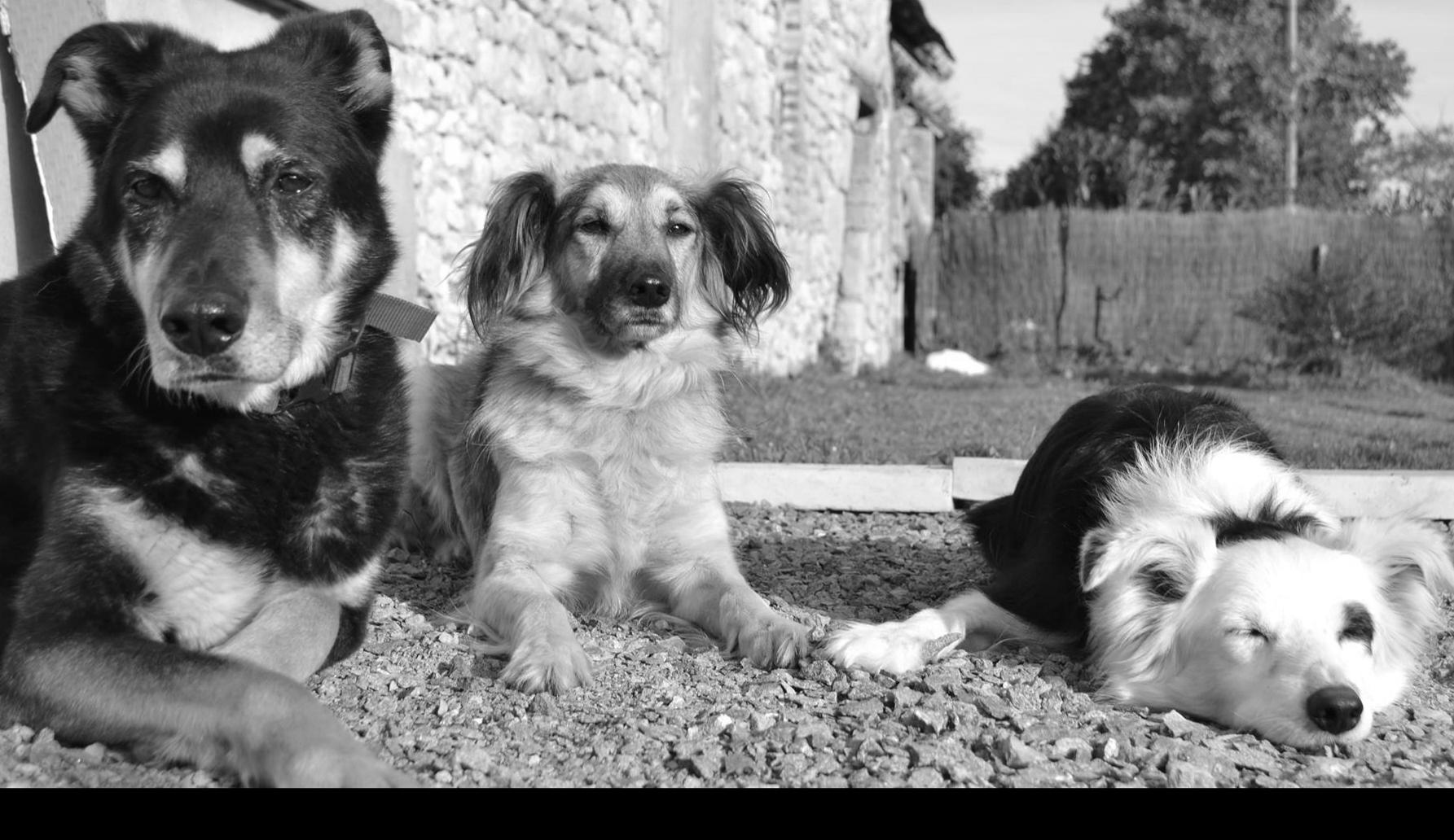 éducateur canin sarthe ,dressage chiens aux pattes de