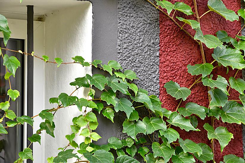 Détail peinture façade