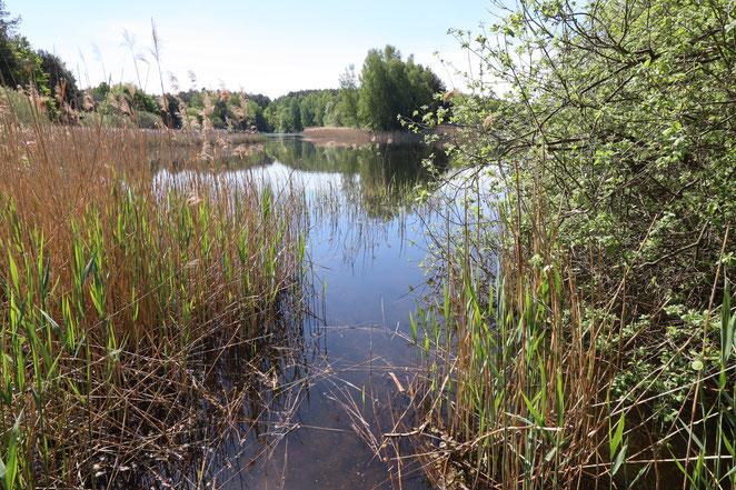 Torfstiche Trebbin - wilde Seen, Wildkräuter und Tiere