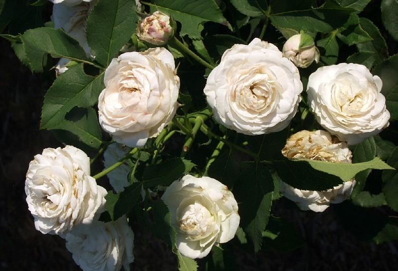 gärten von bienger - clemens bienger gartenarchitekt in konstanz +, Garten ideen