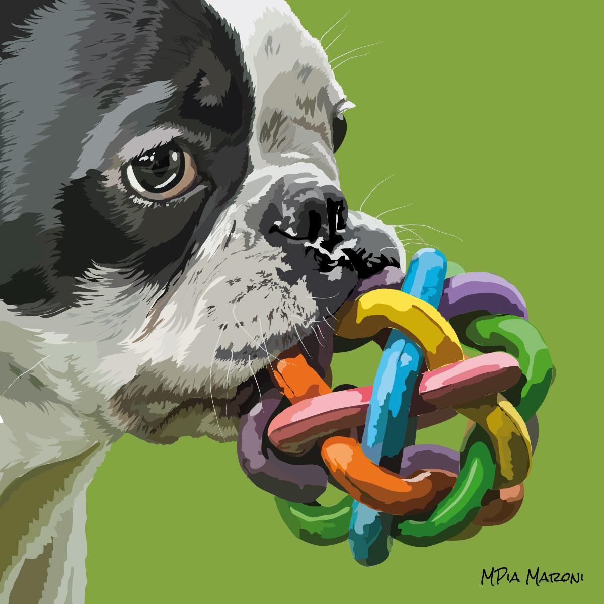 Bulldog Francese, foto da Pixabay