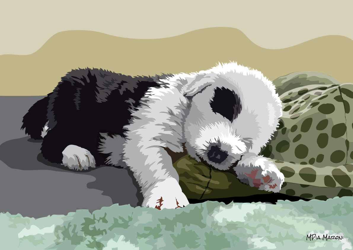 Cucciolo di Bobtail addormentato, foto Doris Haas
