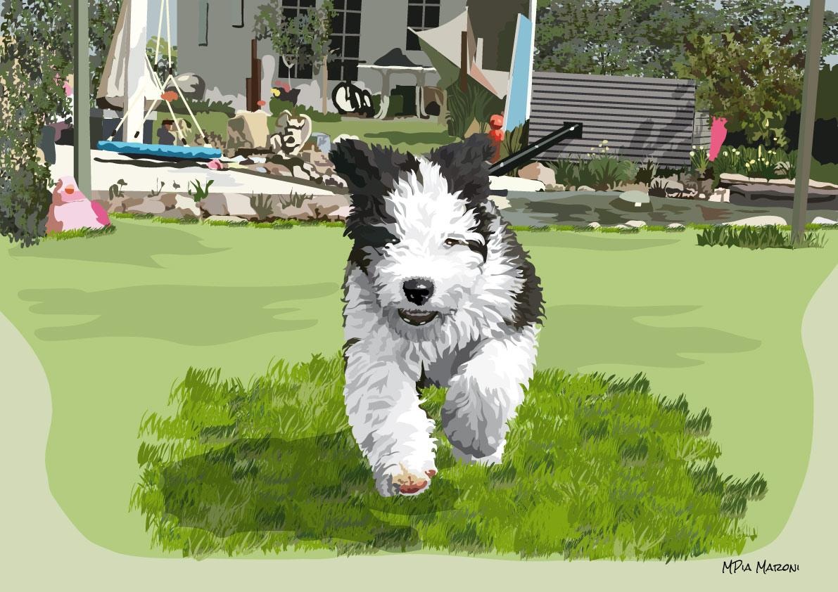 Cucciolo di Bobtail che corre, foto Doris Haas