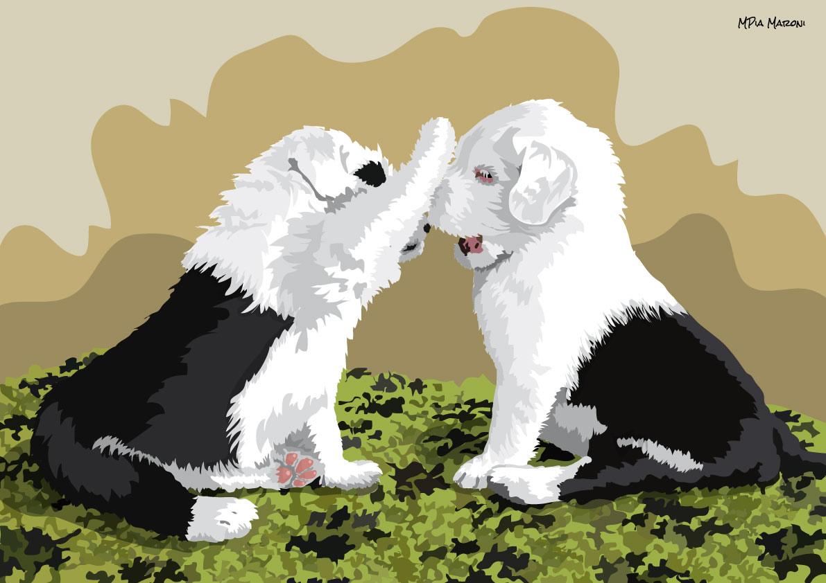 Due cuccioli di Bobtail, foto Doris Haas