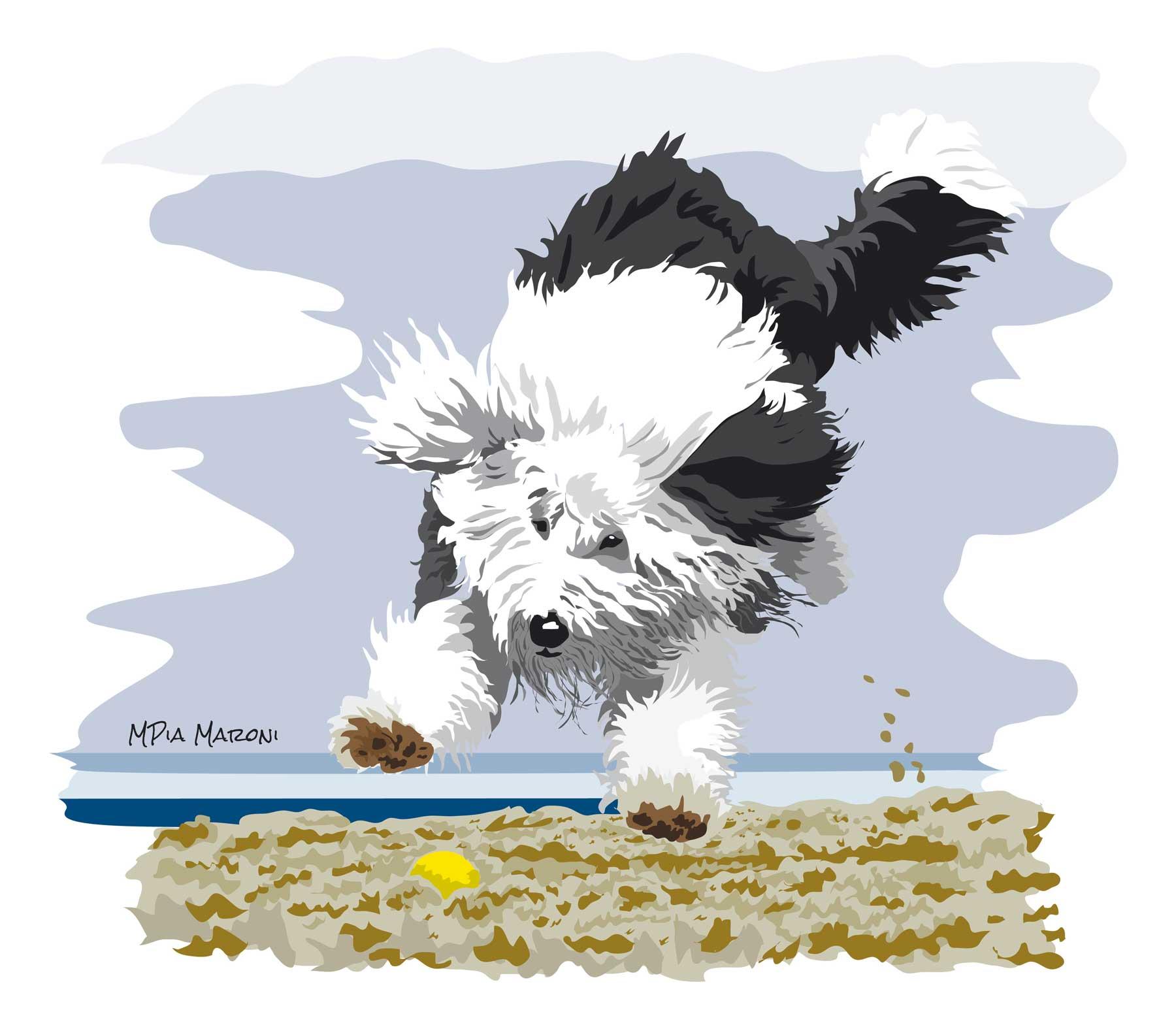 Bobtail salto nella spiaggia, foto Kati Alexander
