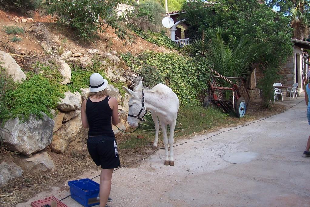 Manu und ihr Esel Mayo
