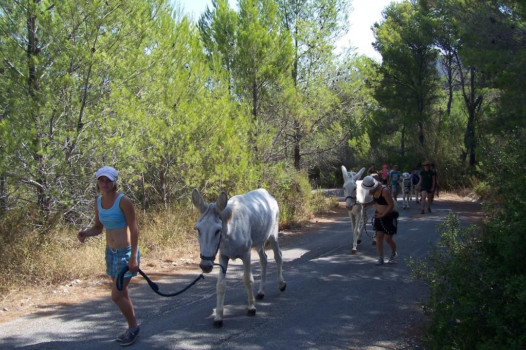 Der Erste Ausflug mit den Eseln- diesmal noch nicht auf dem Rücken!