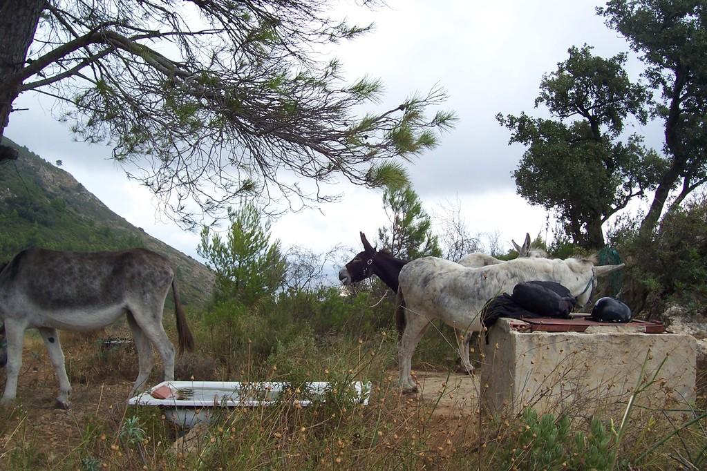 Maja setzt einen Ruf ab fuer die Esel auf dem Gestuet